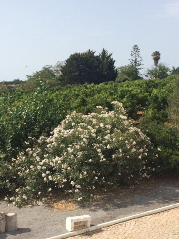9 Bed  Finca For Sale